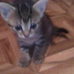 Отдам маленьких и красивых котят!
